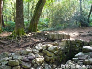 Barenton-Broceliande-04