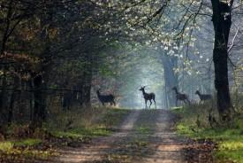 la-vie-en-forêt-brocéliande-en-bretagne-sud-le-gite-brocéliande-à-moins-de-100-mètres-275x184
