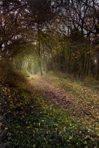 Fraga de Cecebre-El bosque animado