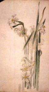 Pinturas botánicas Beatrix Potter