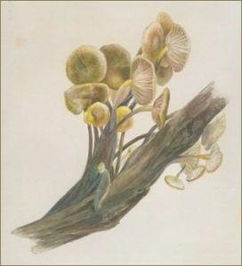 Pinturas botánicas de Beatrix Potter